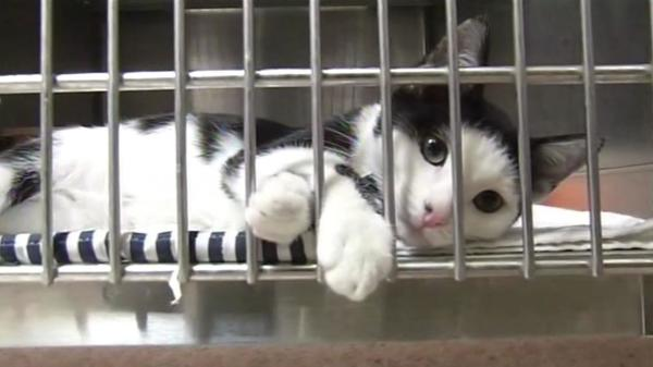 Montgomery County SPCA Rescuing 40 Cats from Amsterdam Farmhouse